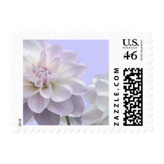 Elegant Dahlias Postage stamp