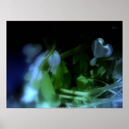 elegant white bleeding hearts, blue #3 print
