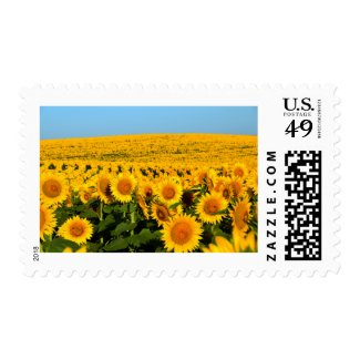 Endless Sunflowers Postage
