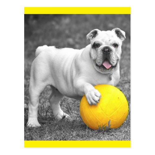 English Bulldog Puppy Dog Postcard