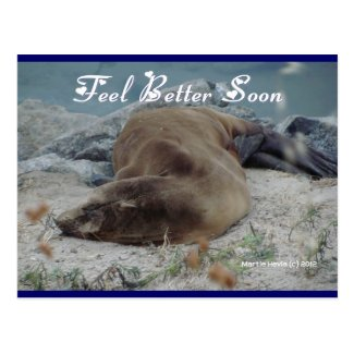 Feel Better Soon (Sea Lion) - Postcard