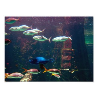 Fish in Aquarium Photograph