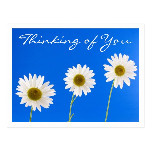 Floral Thinking of You White Daisy Flower - Hello Postcard