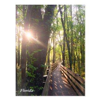 Florida morning sunrise postcard