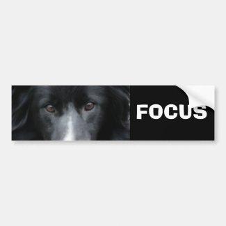 Focus Border Collie Motivational Bumper Sticker