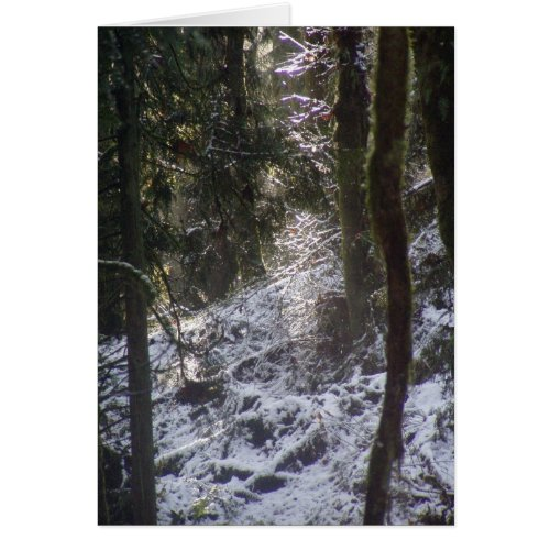 Forest Sun Rays in the Snow #24 card
