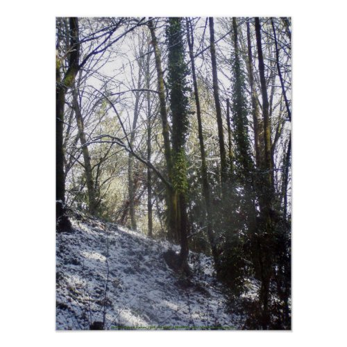 Forest Sun Rays in the Snow #31 print
