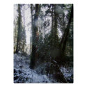 Forest Sun Rays in the snow #43 print