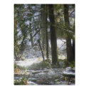 Forest Sun Rays in the Snow #47 print