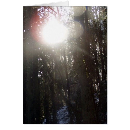 Forest Sun Rays in the Snow #50 card