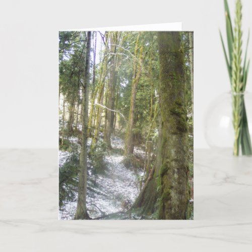 Forest Sun Rays in the Snow #54 card