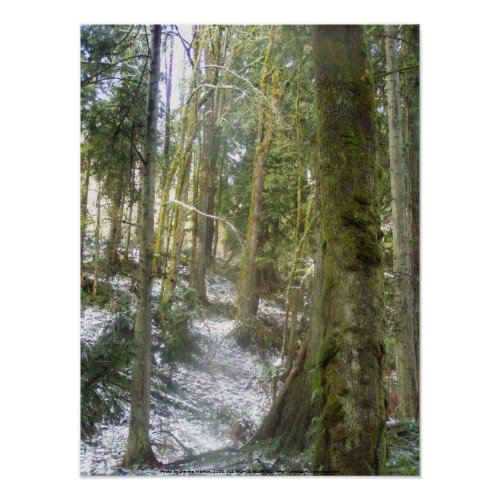 Forest Sun Rays in the Snow #54 print