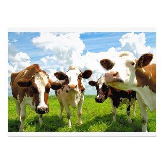 Looking good at Zazzle - Four chatting cows personalized announcement