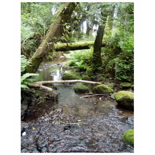 Fox Creek, Rainier, Oregon shirt
