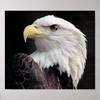 Eagle Freedom print