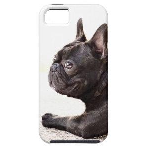 French Bulldog iPhone 5 Case