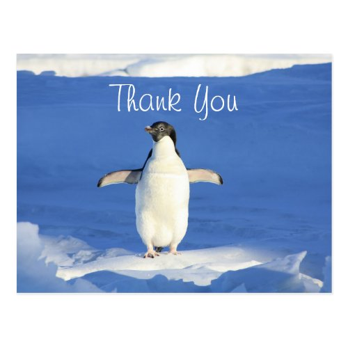 Funny Penguin Thank You Postcard