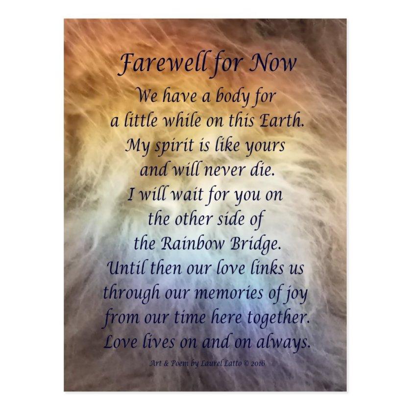 Fur Rainbow Bridge Pet Grief Sympathy Postcards