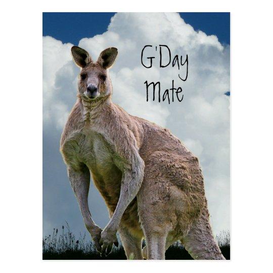 GDay Mate Kangaroo Postcard
