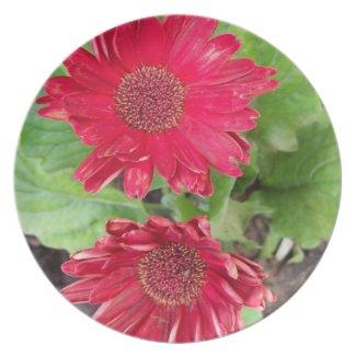 Gerbera Daisies Plate plate
