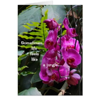 Get Well Orchids Greeting Cards