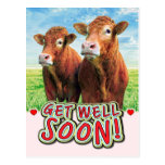 Funny Cows Get Well Soon Postcard