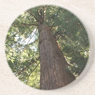 Giant Redwood Sequoia Treetop Beverage Coaster