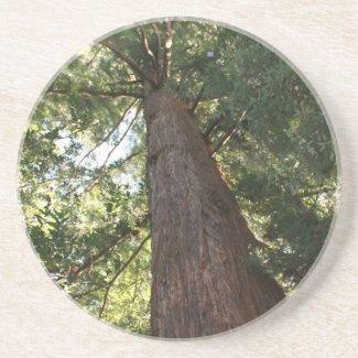 Giant Redwood Sequoia Treetop Beverage Coaster