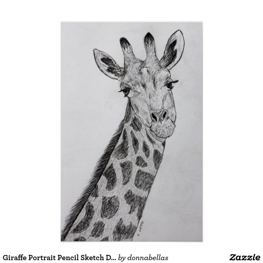 Giraffe Portrait Pencil Sketch Drawing Art Print
