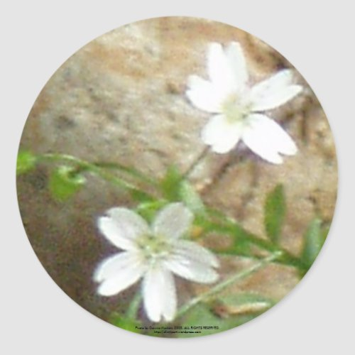 Gnat Creek Flowers #2 sticker