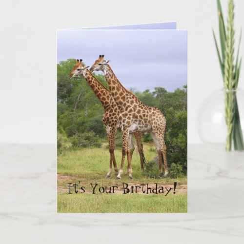 """Go Wild"" Birthday Giraffes Card"