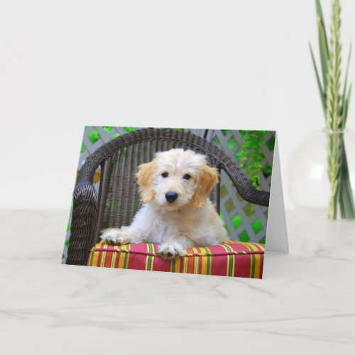 Golden Doodle Puppy card