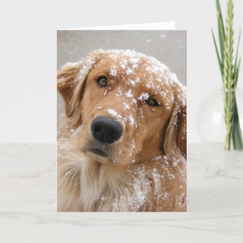 Golden Holidays and a Dog-gone happy New Year Holiday Card
