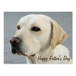 Golden Labrador Retriever Photograph Father's Day Postcards