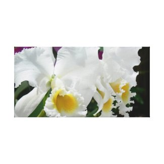 Gorgeous White Orchids Photo Wrapped Canvas Gallery Wrap Canvas