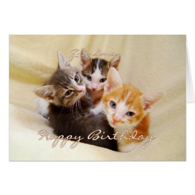 Grandma Happy Birthday Trio of Kittens Greeting Card