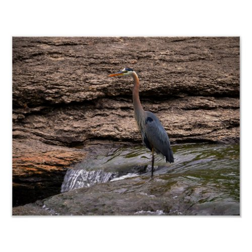 Great Blue Heron at the Falls