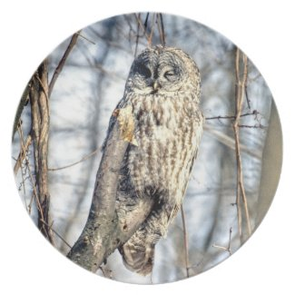 Great Gray Owl - Creamy Brown Watcher Plates