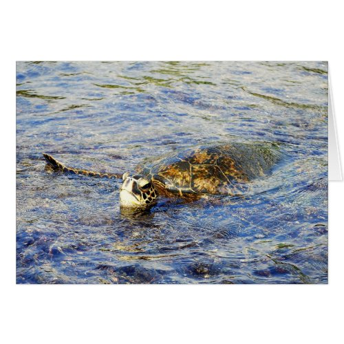 Green Sea Turtle, Hawaii, Card