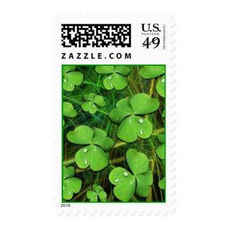 Green Shamrock St Patrick's Day Postage Stamp