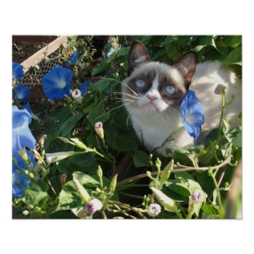 Grumpy Cat in the Morning Glories 20x16 Poster