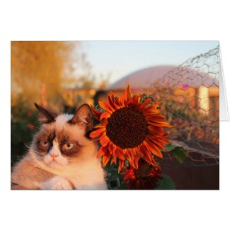 Grumpy Cat Sunflower Note Cards