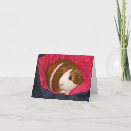 Guinea Pig in a Cozie Notecard