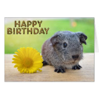 Guinea pig yellow flower card