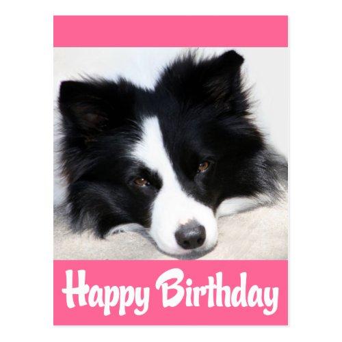 Happy Birthday Border Collie Puppy Dog Postcard