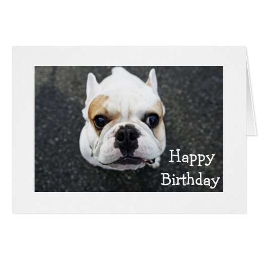 Happy Birthday Bulldog Greeting Card Verse Zazzle