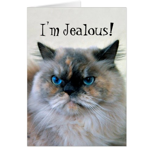 Happy Birthday Jealous Himalayan Persian Cat Humor Greeting Card