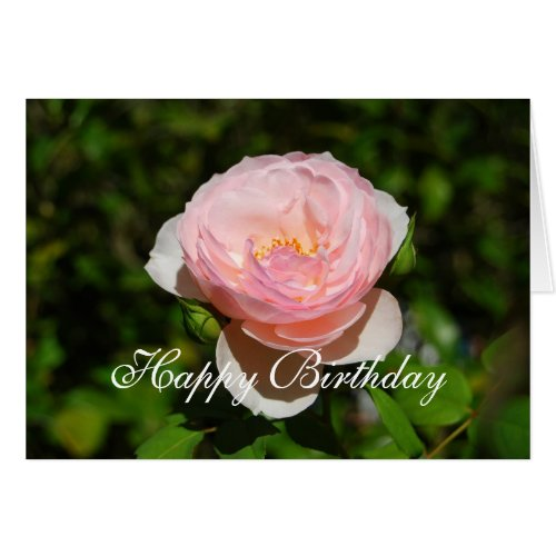 Happy Birthday Pink English Rose Greeting Card