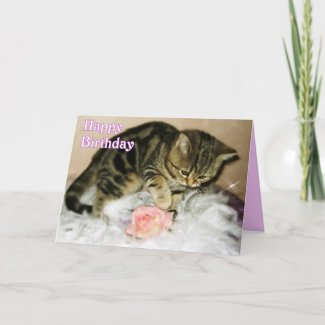 Happy Birthday - Tabby Kitten Birthday card card
