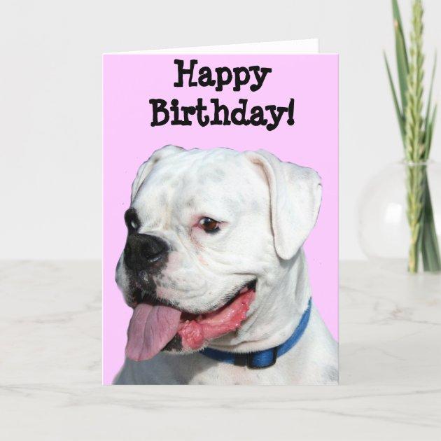 Happy Birthday White Boxer Greeting Card Zazzle Com